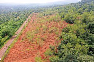 Plantation Drive at Codar